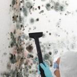 Black-Mold-Remediation-Miami