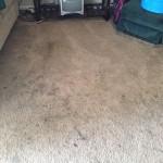 Miami-Dirty-Carpet