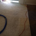Miami-Traffic-Area-carpet-cleaners